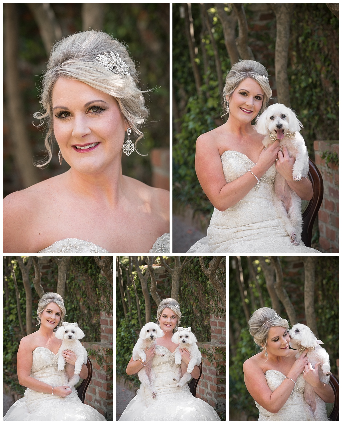 Bride with dogs